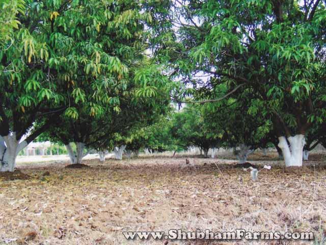 Ramtek-Farmhouse-Shubham-Farms-Nagpur-Farmhouse-20
